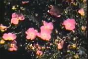 Glimpse of the Garden
